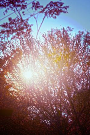 foret sapin: Automne arbres forestiers avec coucher de soleil