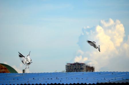 paloma blanca: Paloma del blanco contra el cielo concepto de la libertad, la paz y la espiritualidad Foto de archivo