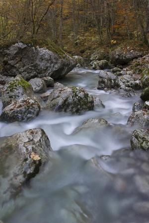 River stream in autumn forest (stream Kozjak, Soca valley, Slovenia)