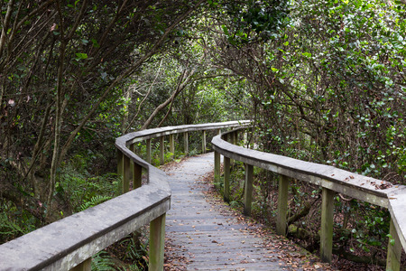 Raised wooden observation trail in Shark Valley, Everglades, Florida Archivio Fotografico