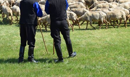 shepherds: Sheep and shepherds Stock Photo