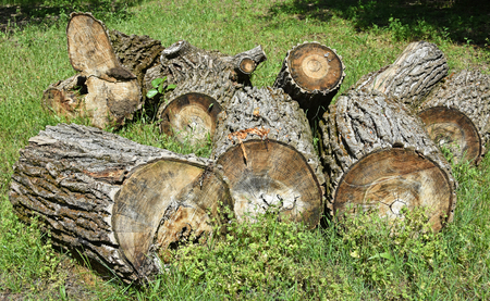 truncated: Cut out tree trunks Stock Photo