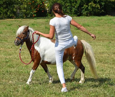 Pony horse in training outdoors Stock Photo - 77147305