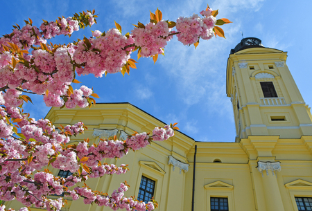 Tower of the Great Church in Debrecen city with cherry tree flowers, Hungary