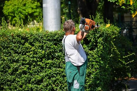 Gardener works with a hedge trimmer Stock fotó