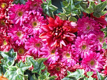 Pink and red margaret flowers