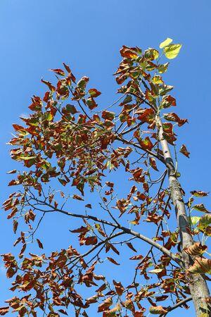 Little tree in autumn time Reklamní fotografie