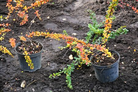 Plants ready to planting in autumn time