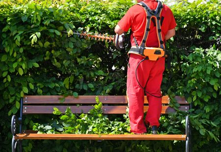 Man is working with a hedge trimmer standing on a bench Banco de Imagens