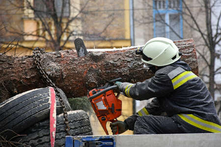 Firefighter cuts a pinetree with a chainsaw 版權商用圖片