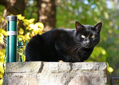Black cat on the fence 版權商用圖片