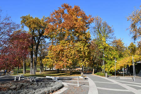 Park in the woods, Debrecen city, Hungary