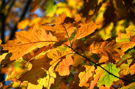 Yellow leaves in autumn time