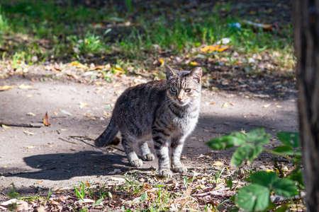 gray cat: A gray street cat on ground path.