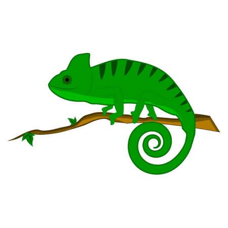 cameleon: Green chameleon on the branch vector illustration