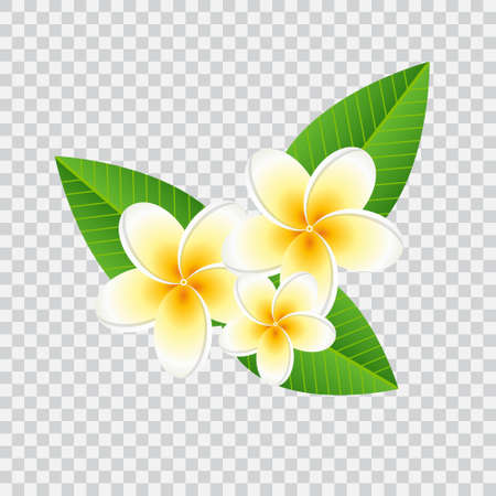 checked background: Plumeria frangipani flower with green leaves on checked background