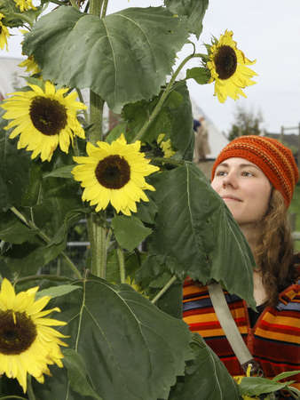 observes: Young female observes bright sunflowers. Stock Photo