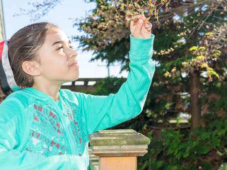 japanese maple tree: Preteen girl picks leafs from Japanese maple tree Stock Photo