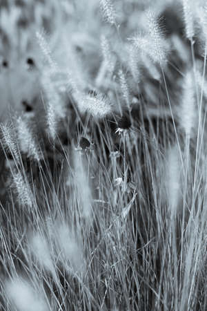 spent: Spent flowers amongst tall cattail grass prepare to seed at seasons end