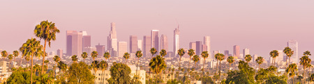 Downtown Los Angeles and Palm Trees Panorama