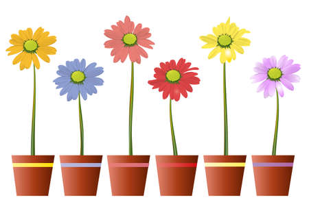Bunte Blumen im Topf