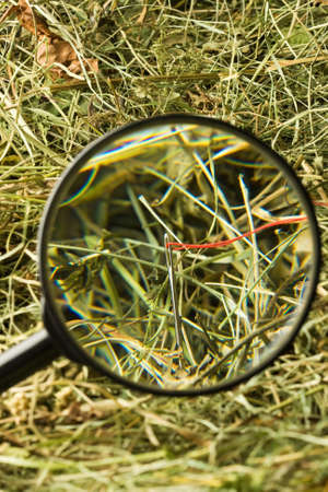 Finding the needle with magnifying glass in the haystack Stock Photo - 16925551