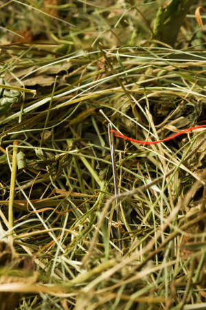 Needle with red thread in the haystack photo