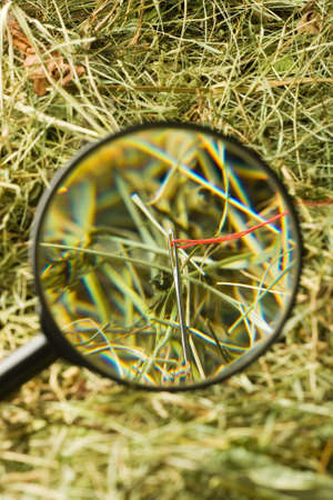Finding the needle with magnifying glass in the haystack Stock Photo - 17421265