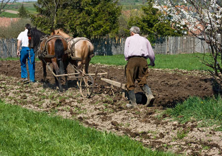 plough land: Two men plowing the land