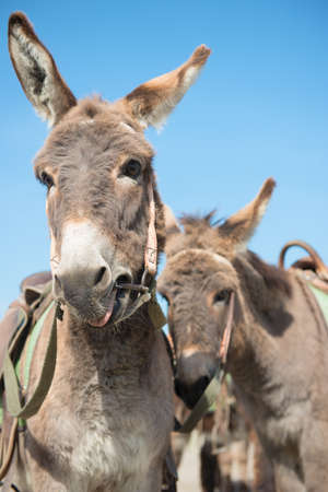 A few donkeys tired from an exhausting heat