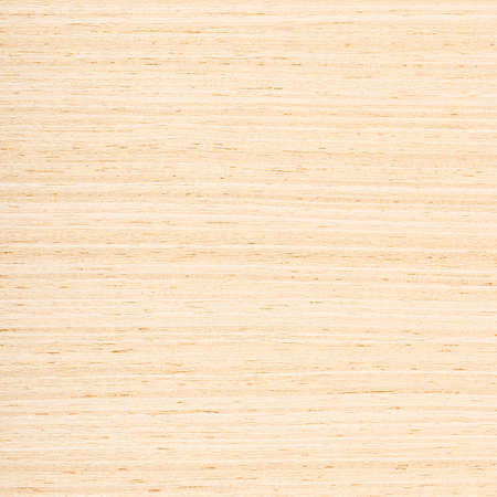 birch: Fragment background of wooden texture for designers Stock Photo