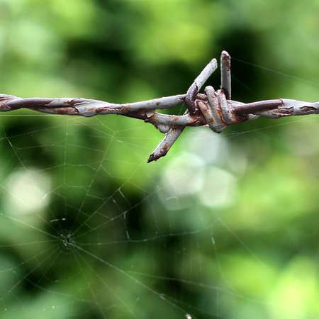 barbed wire with spider web photo