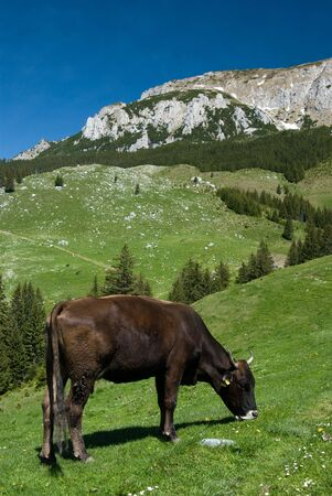husbandry: Husbandry landscape in mountains