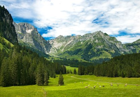 Alpine meadow in central Switzerland. Arnibach Valley, near Engelberg. Imagens