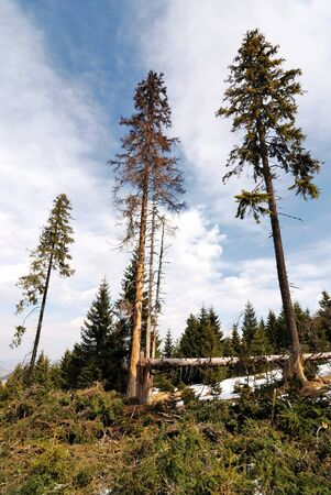 deforested: Deforested area in a forest with cutted tree in the foreground.