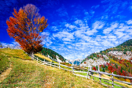Colorful autumn morning in the Carpathian Mountains. Magura village, Transylvania, Romania.