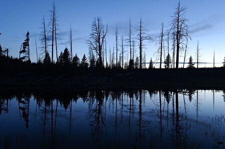 イエローストーン国立公園、日没後の小さな池と木のシルエット 写真素材