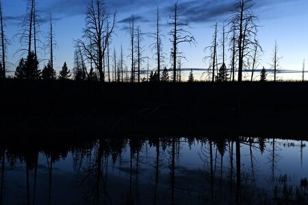 treeline: Silhouet reflection in a pond in Yellowstone National Park, after sunset. Stock Photo