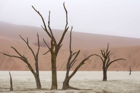 Dead tree and red sand dunes in Deadvlei, Namib-Naukluft National Park, Namibia
