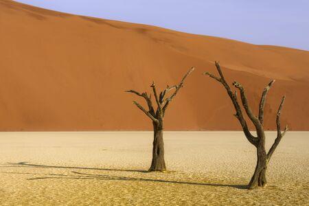 Árbol muerto y dunas de arena roja, Namibia Foto de archivo