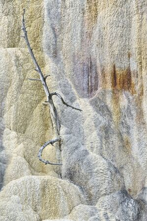 Tree killed by mineral deposits, Mammoth Hot Springs, Yellowstone National Park, Wyoming, USA Фото со стока