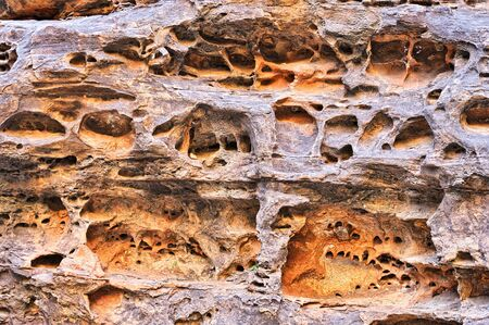 Eroded sandstone wall in Cathedral Gorge, Bungle Bungles National Park, Northern Territories, Australia