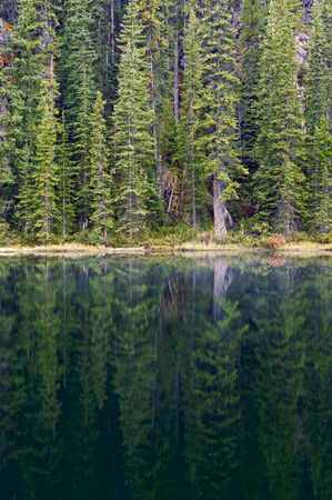 Reflection in pond, early morning, Banff National Park, Alberta, Canada Reklamní fotografie