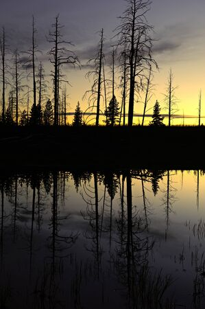 Small pond after sunset in Yellowstone National Park, Wyoming