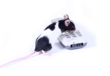 dialing: ratoncito marcar un n�mero Foto de archivo
