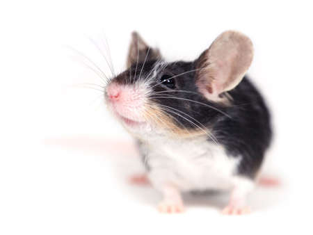 portret: close up of a mouse