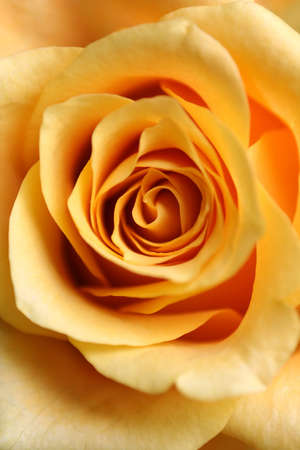 than: a macro of a rose - closer than normal