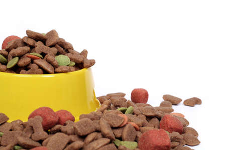 bowl of dog food isolated on white