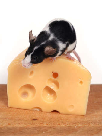 inducement: little mouse and cheese