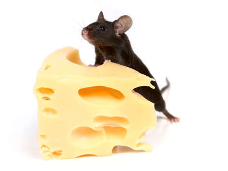 inducement: close up on little mouse and cheese Stock Photo
